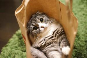 だるい 猫