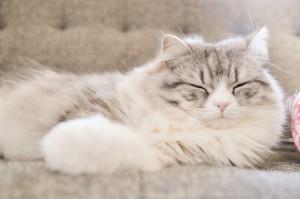 寝ている猫1